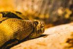 dustin-keeslar-portfolio-photography-fort-wayne-indiana-childrens-zoo1