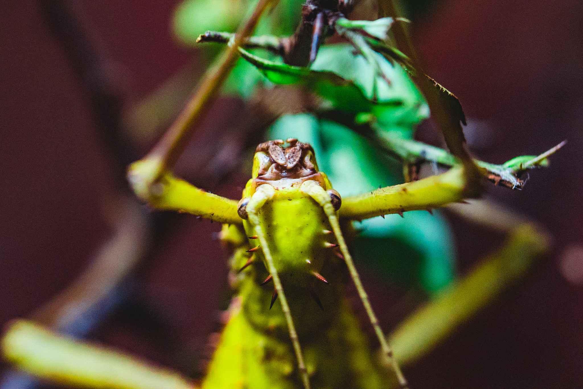 dustin-keeslar-portfolio-photography-fort-wayne-indiana-childrens-zoo3